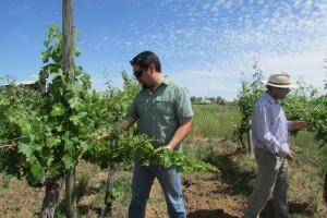 Agricultores denuncian grave daño en viñedos por fungicida contaminado